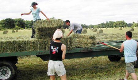 Фермерство, Фермерский Бизнес, Сельское Хозяйство