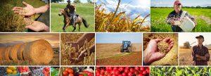 Каталог товаров, новости сельского хозяйства Беларуси