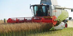 Уборка рапса, новости сельского хозяйства Беларуси