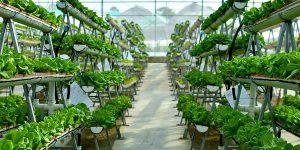 Вертикальные фермы - инновации и технологии в сельском хозяйстве