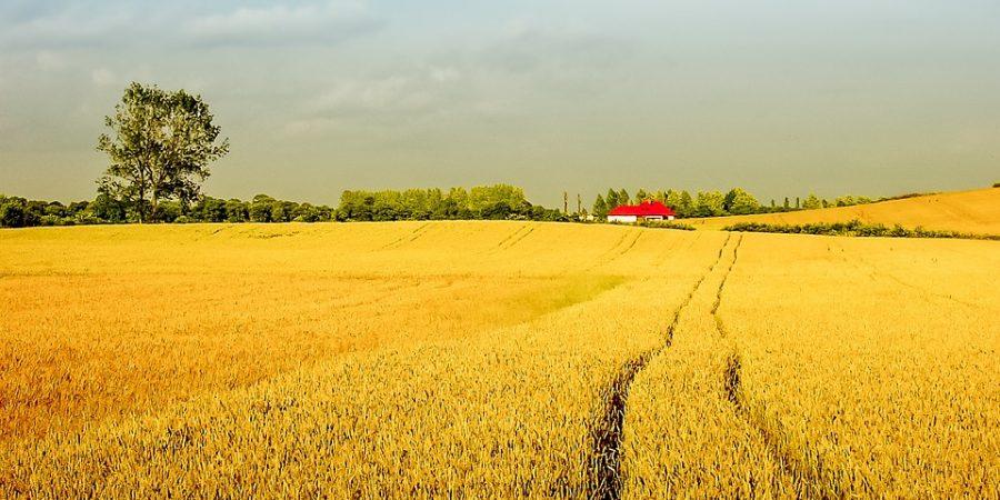 Сельское хозяйство Беларусь