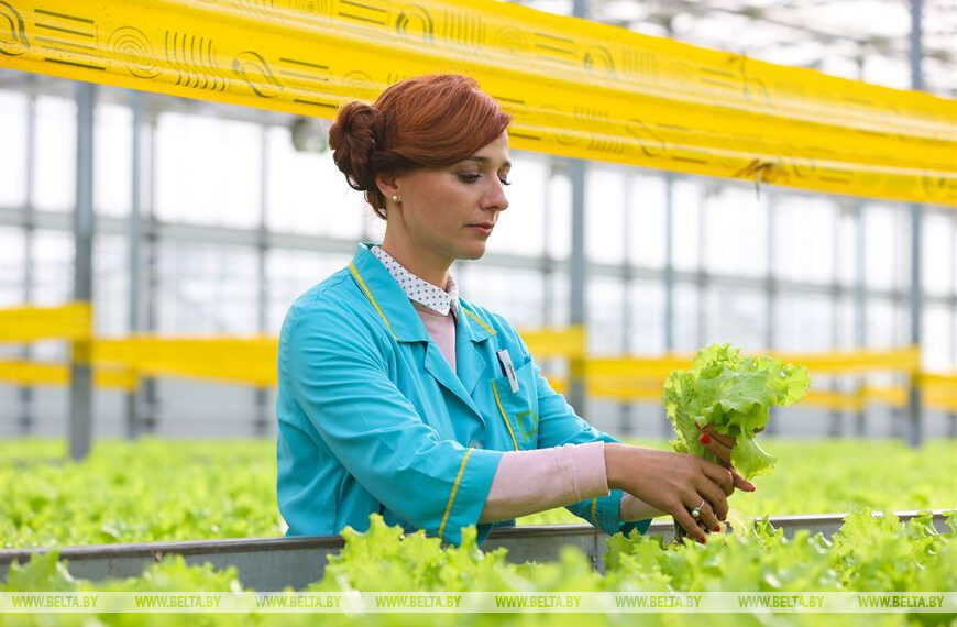РЕПОРТАЖ: Склад – витаминов клад, или Как создаются запасы даров природы для минчан