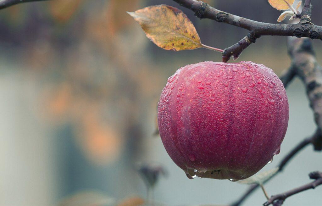В ЕАЭС в 2021 году прогнозируется почти полная самообеспеченность сельхозпродукцией, кроме фруктов
