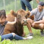 Обними корову. Борьба со стрессом по-нидерландски
