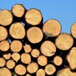 Нововведения в реализации древесины и ведении лесного хозяйства в РБ