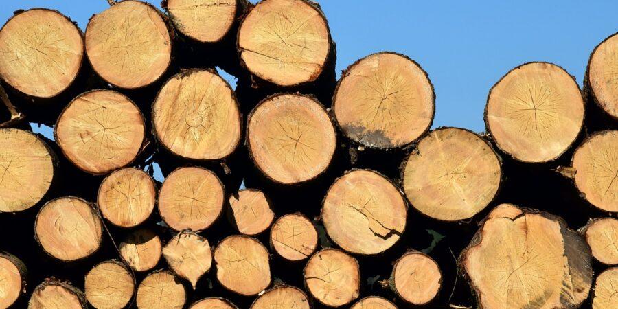Реализация древесины и ведение лесного хозяйства - Новости сельского хозяйства Беларуси