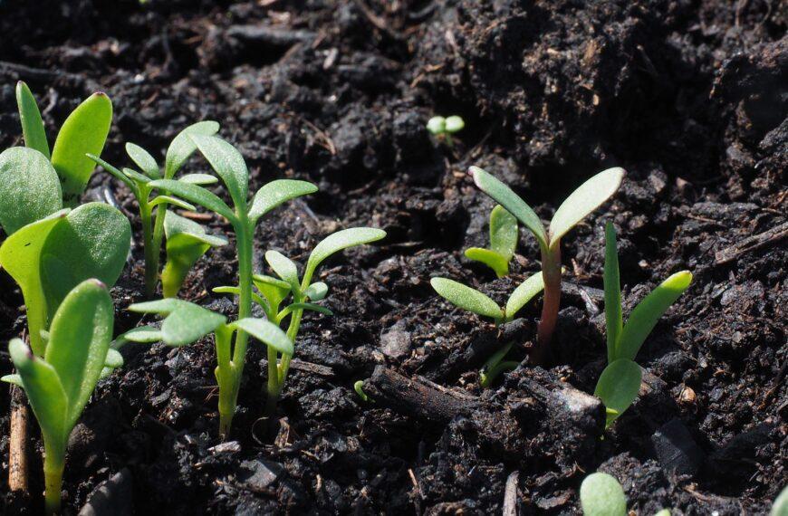 Почва Беларуси – с неё всё начинается