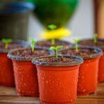 Огород в квартире и как его защитить при помощи микроорганизмов