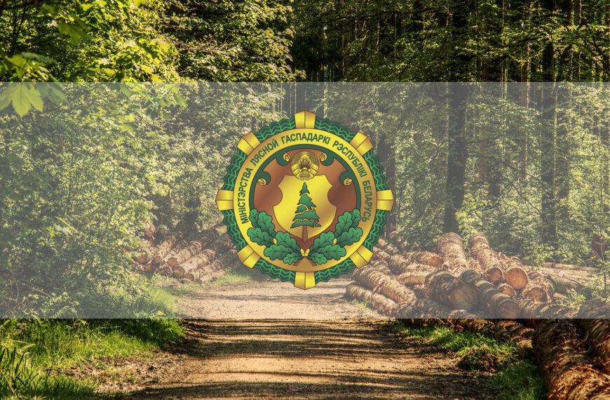 Новые приоритеты работы лесной отрасли 2021: что изменилось?