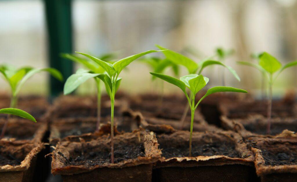 FFAR принимает предварительные заявки в рамках программы Посевные решения 2021 года