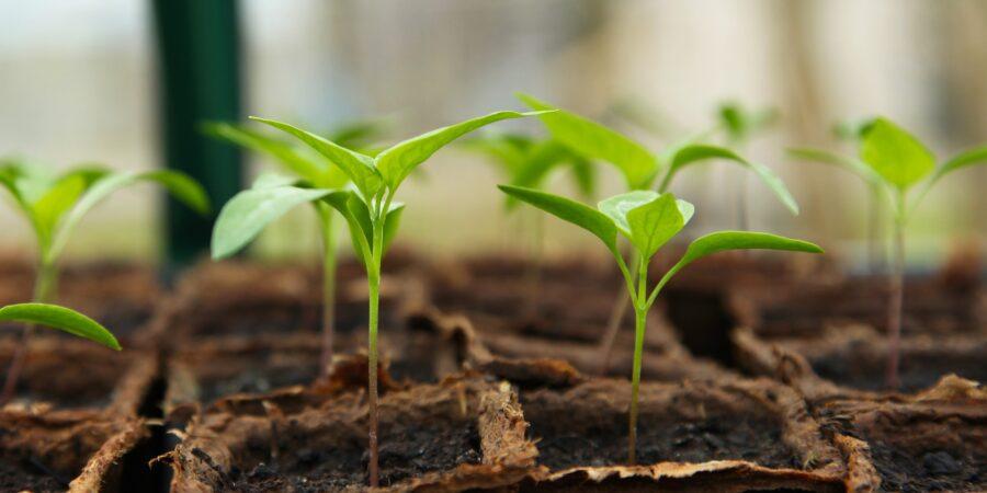 Грант Посевные решения 2021, Seedling Solutions - Новости сельского хозяйства Беларуси