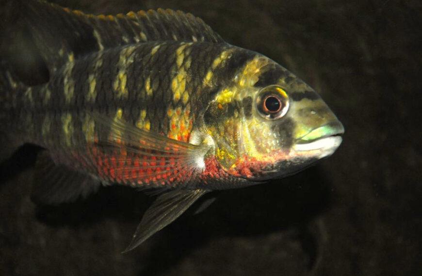 Более 2 миллионов долларов выделено на борьбу с вирусом рыб