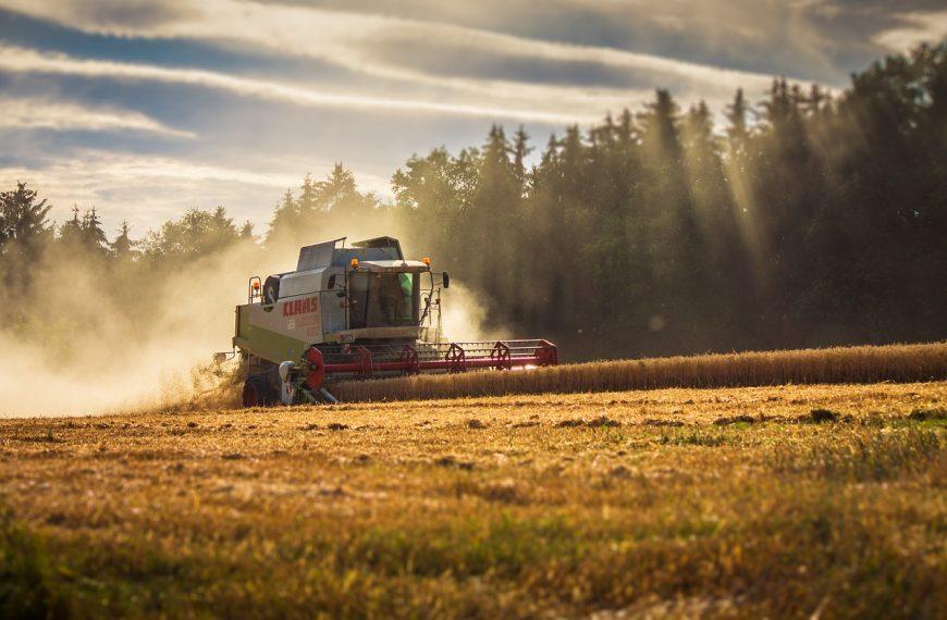 Эксперты посчитали, какой урожай зерна будет в 2021 году