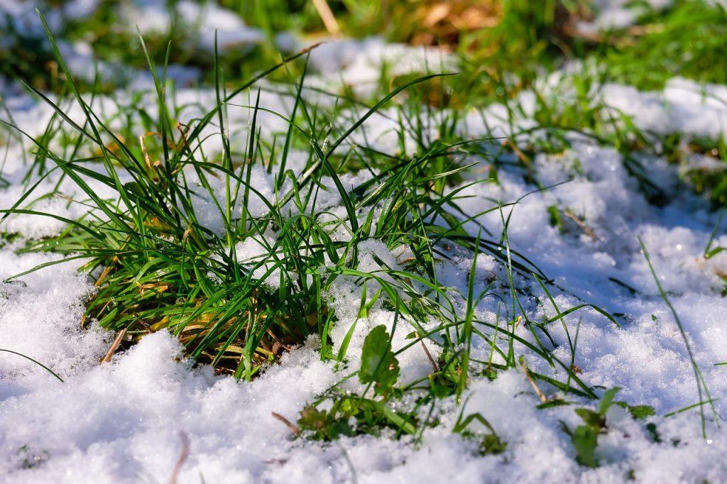 Мартовское промерзание почвы  в некоторых районах Беларуси не является опасным для озимых культур