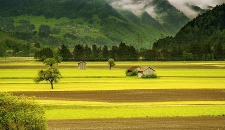 Швейцарские фермеры и пестициды - Новости сельского хозяйства