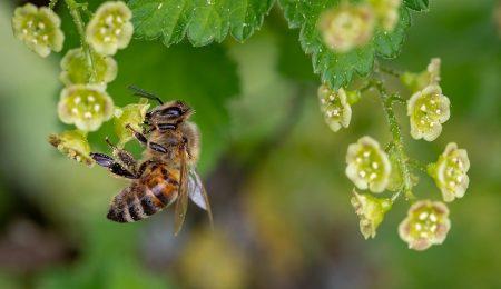 Пчеловодство - Новости сельского хозяйства