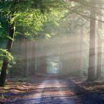 Лес сегодня и навсегда
