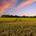Правительство делает ставки на хороший урожай в 2021 году