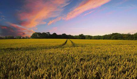 Поле и урожай - Новости сельского хозяйства Беларуси