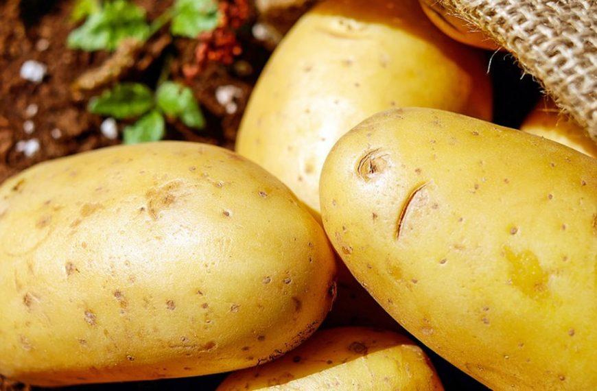 Теперь из картофеля можно будет получать функциональный веганский белок. Первый завод по производству строится в Британии