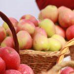 Робот MARS, собирающий яблоки с деревьев, прошел испытания и готов помогать фермерам
